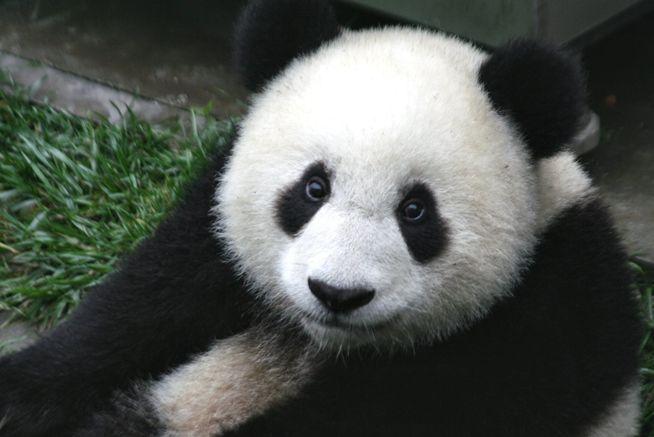 Google Panda debarque en France